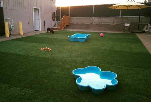 Biscuits doggy daycare uses safe artificial dog grass by PupGrass