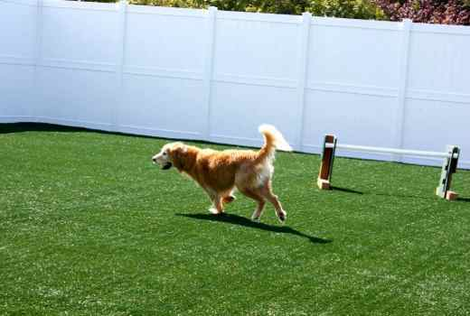Dog running and jumping on synthetic grass by PupGrass