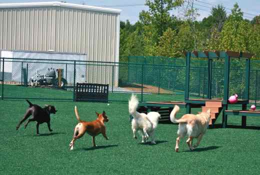 Happy dogs playing on pupgrass artificial grass