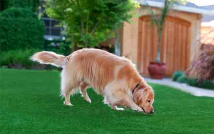 Best Artificial Gr For Dogs 2018