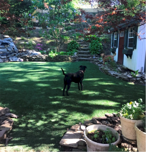 PupGrass - Smarty_9523, Pupgrass original artificial dog grass, pet, grass, pet turf, doggie grass, dog lawn, pup-grass, pup grass, artificial dog grass, artificial pet grass, customer reviews