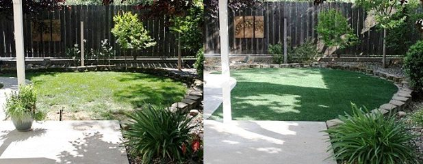 before and after with pupgrass