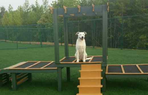 pupgrass makes the ultimate doggy playground